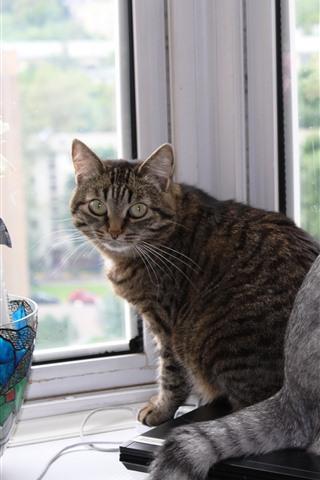 iPhone Wallpaper Two cats, windowsill