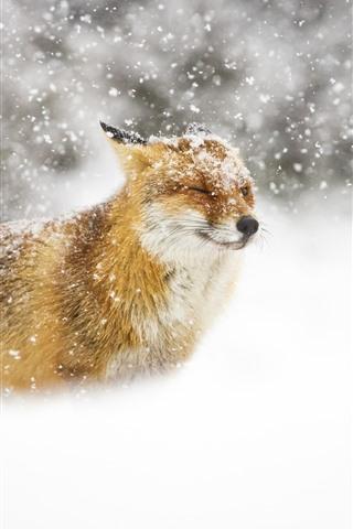 iPhone Wallpaper Wildlife, fox, snowy, winter