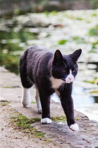 iPhone Wallpaper Black cat walking, pond