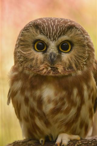 iPhone Wallpaper Cute little owl, standing
