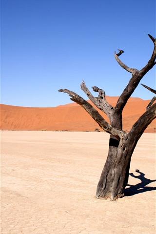 iPhone Wallpaper Dead tree, desert, hot