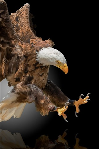 iPhone Wallpaper Eagle flight, wings, black background