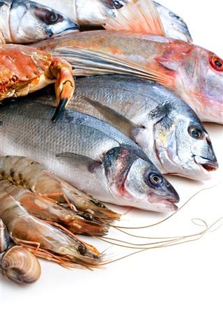 iPhone Wallpaper Fish, crab, shrimp, seashell, white background