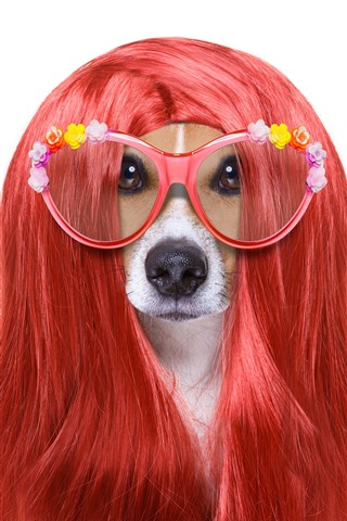 iPhone Wallpaper Funny animal, dog, hairstyle, glasses