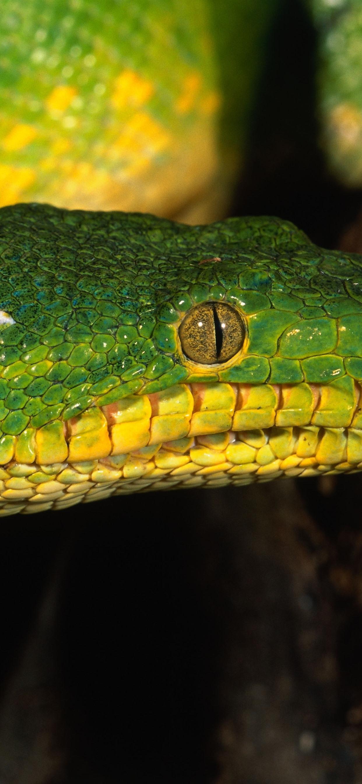 Green Snake Head Eye 1242x2688 Iphone Xs Max Wallpaper