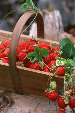iPhone Wallpaper Many strawberries, basket, stump