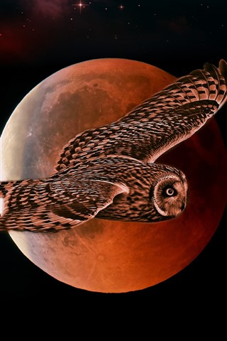 iPhone Wallpaper Owl flight, moon, night