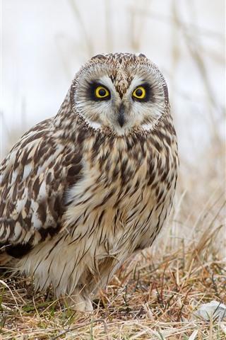iPhone Wallpaper Owl, ground, grass, hazy