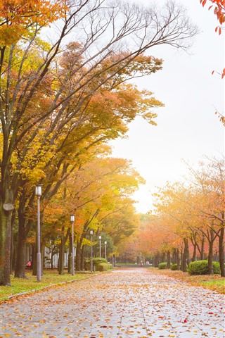 iPhone Wallpaper Park, road, trees, yellow leaves, autumn
