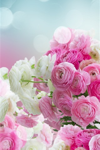 iPhone Wallpaper Pink and white ranunculus flowers, glare
