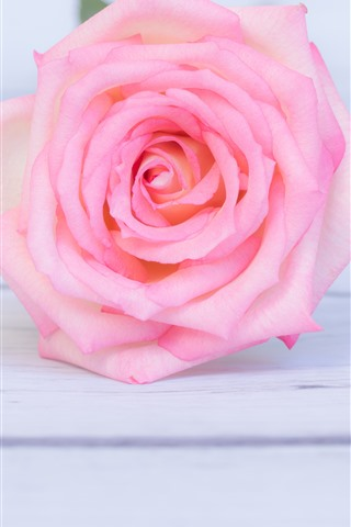 iPhone Wallpaper Pink rose close-up, wood board