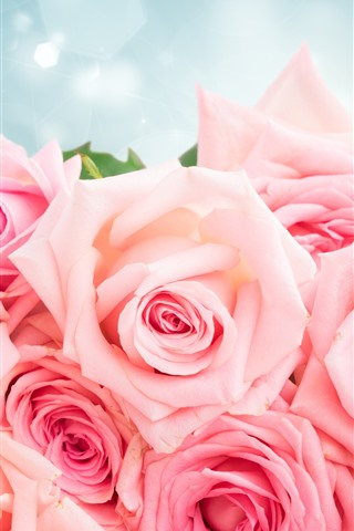 iPhone Wallpaper Pink roses, bouquet, glare, romantic