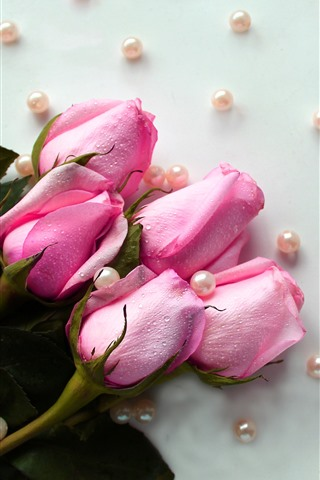 iPhone Wallpaper Pink roses, water droplets, beads