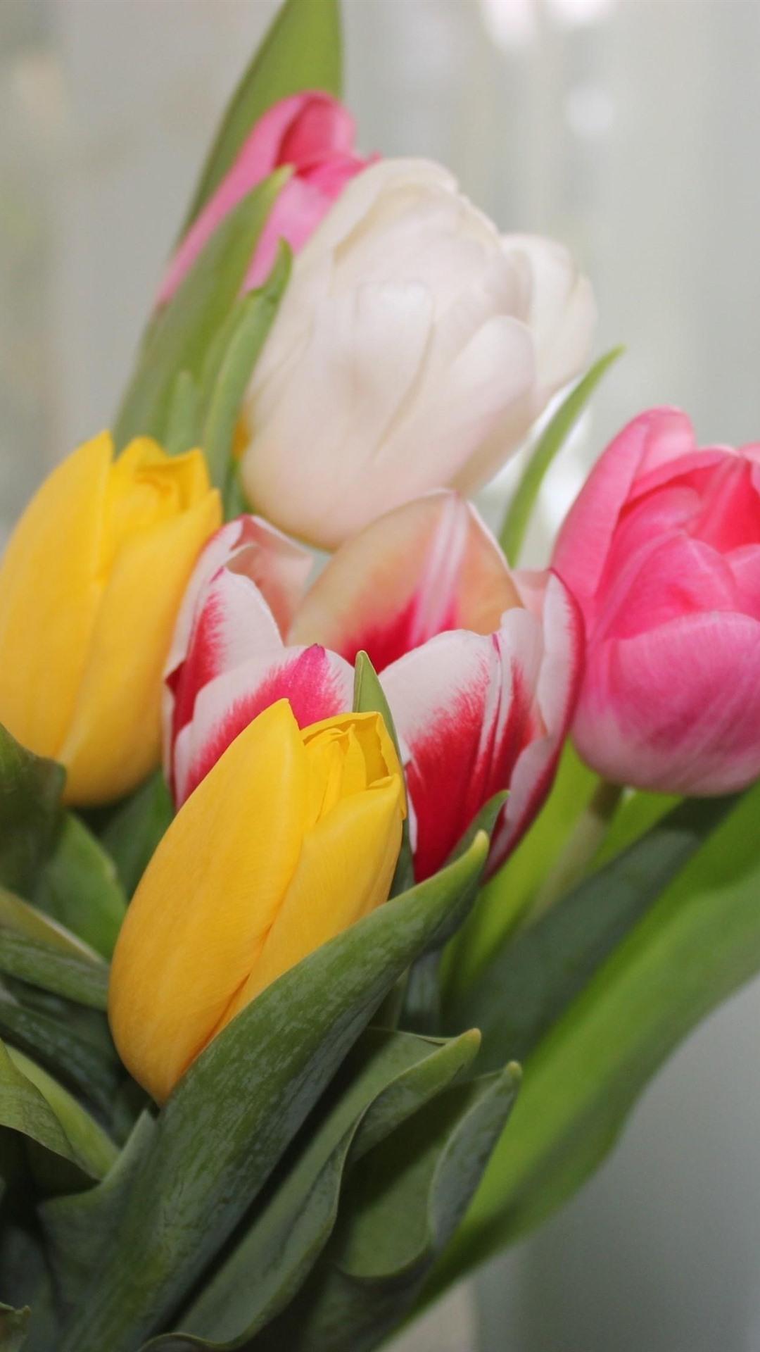 тюльпаны фото на айфон тому