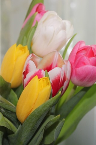 iPhone Wallpaper Pink, white, yellow tulips, bouquet