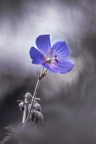 iPhone Wallpaper Purple flower close-up, petals, blurry
