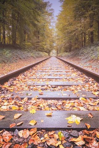 iPhone Papéis de Parede Ferrovia, folhas amarelas, árvores, outono