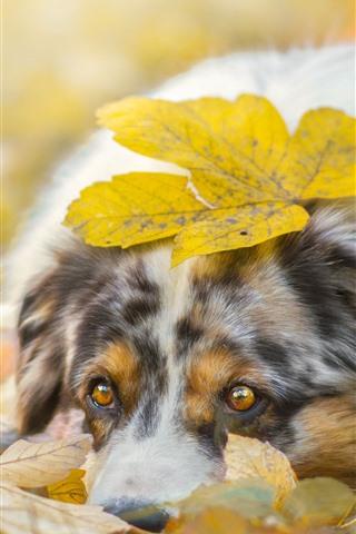 iPhone Wallpaper Sadness dog, yellow leaves, autumn