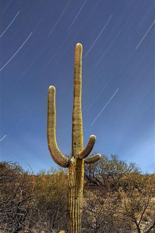 iPhone Wallpaper Saguaro, bushes, desert, meteor