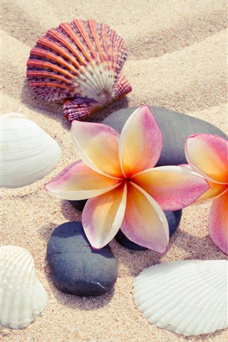 iPhone Wallpaper Sands, plumeria, seashells