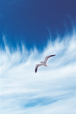 iPhone Wallpaper Seagull flight, sky, white clouds
