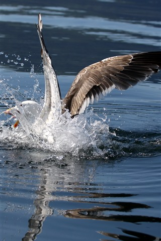 iPhone Wallpaper Seagull, water splash, wings