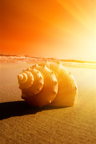 iPhone Wallpaper Seashell, sands, sunshine, glare