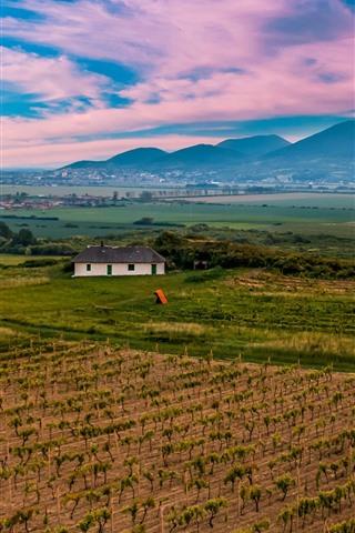 iPhone Wallpaper Slovakia, mountains, vineyard, fields, village