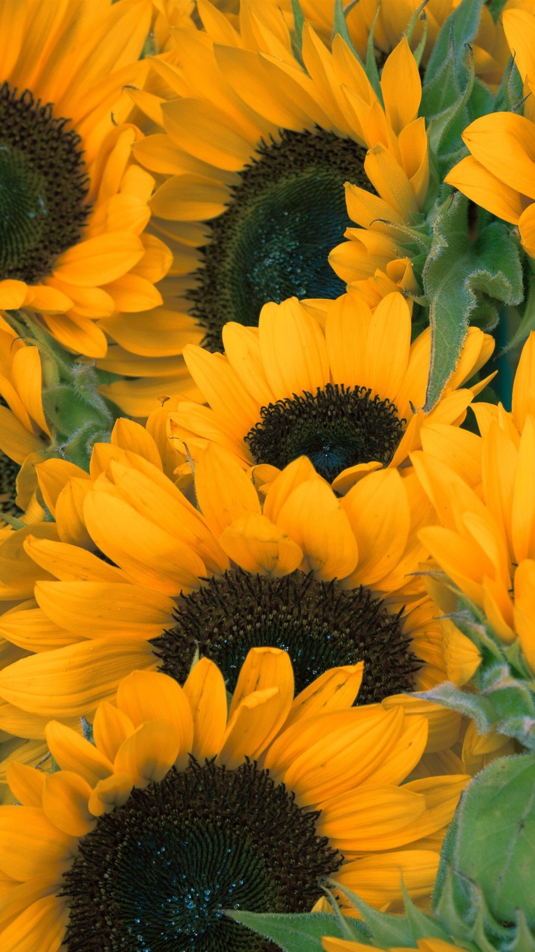Sunflowers Yellow Flowers Summer 1125x2436 Iphone 11 Pro Xs X Wallpaper Background Picture Image
