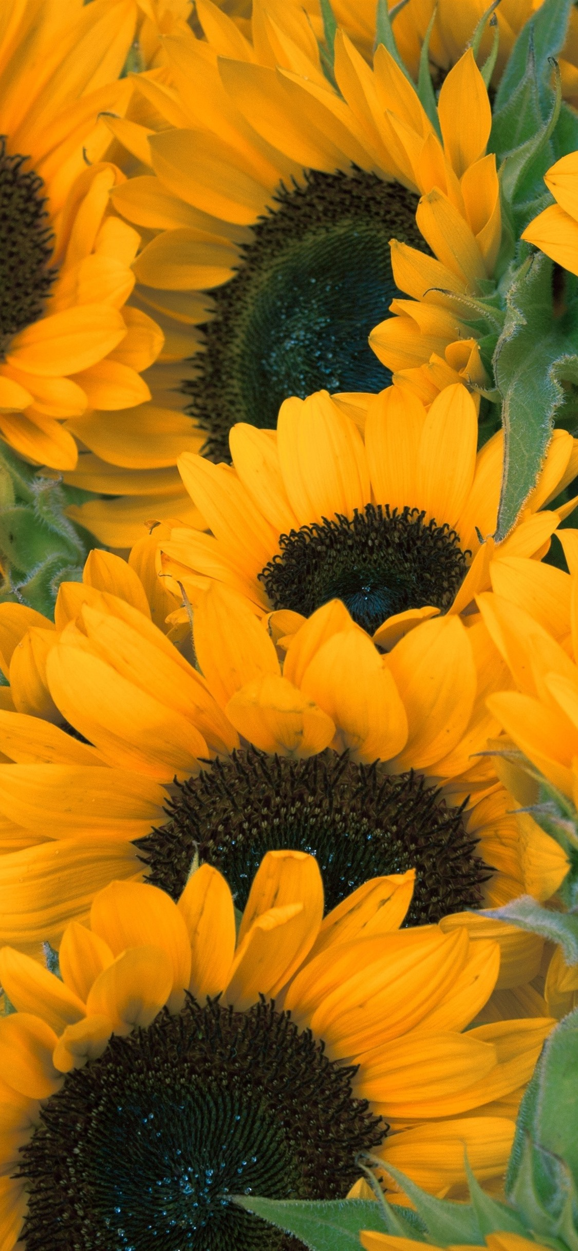 yellow flowers, summer 1125x2436 iPhone