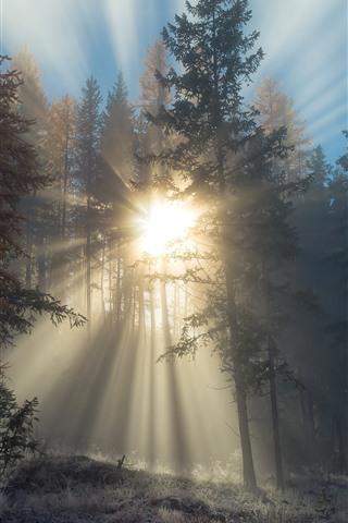 iPhone Wallpaper Sunrays, trees, fog, morning
