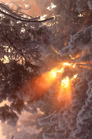 iPhone Wallpaper Thick snow, trees, winter, sun rays