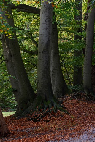iPhone Wallpaper Trees, path, park