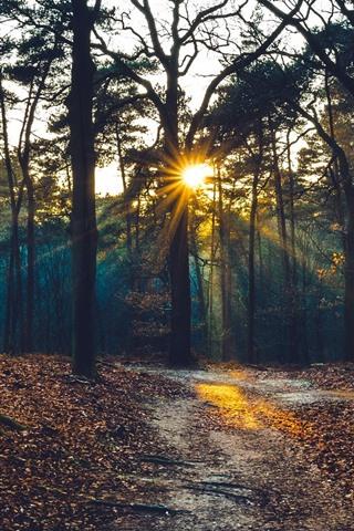 iPhone Wallpaper Trees, sun rays, morning, autumn