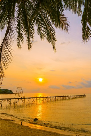 iPhone Wallpaper Tropical, summer, beach, sea, palm trees, pier, sunset