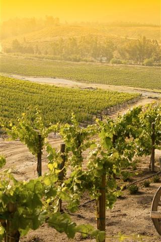 iPhone Wallpaper Vineyard, village, sunshine, morning