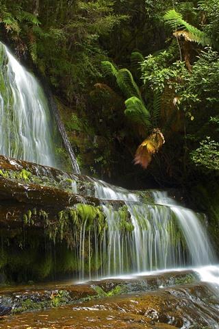 iPhone Wallpaper Waterfall, plants, nature
