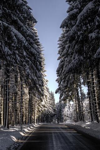 iPhone Wallpaper Winter, snow, road, trees, sun rays