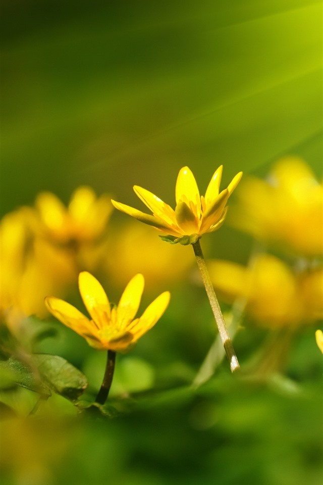 Wallpaper Yellow flowers, sunshine 2880x1800 HD Picture, Image