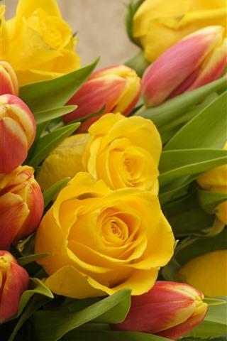 iPhone Wallpaper Yellow roses and red tulips