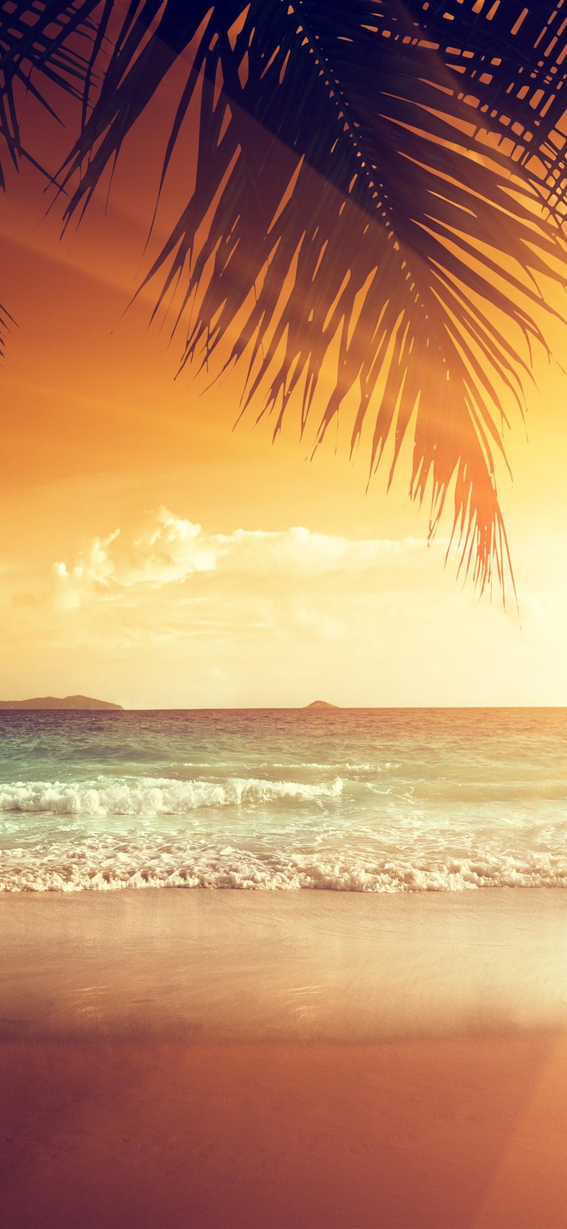 Beautiful Sunset Palm Tree Leaves Beach Sea Tropical Summer