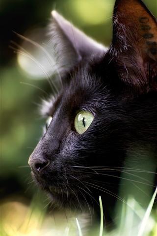 iPhone Wallpaper Black cat, look, eyes, hazy background