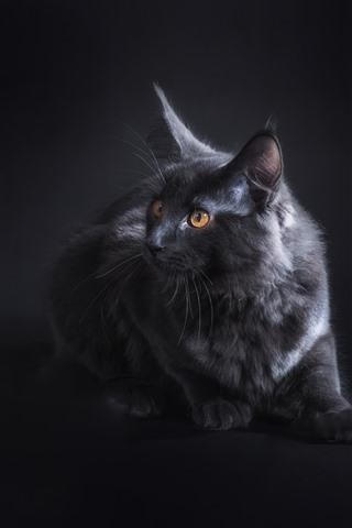 iPhone Wallpaper Black cat look, yellow eyes, darkness