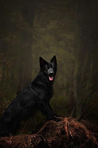 iPhone Wallpaper Black dog, forest, forest, darkness