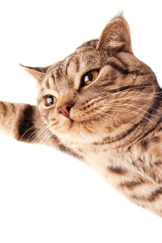 iPhone Wallpaper Cat flying, paws as wings, white background