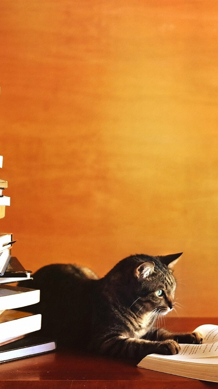 壁紙 猫勉強 本を読んで 1920x1200 Hd 無料のデスクトップの背景 画像