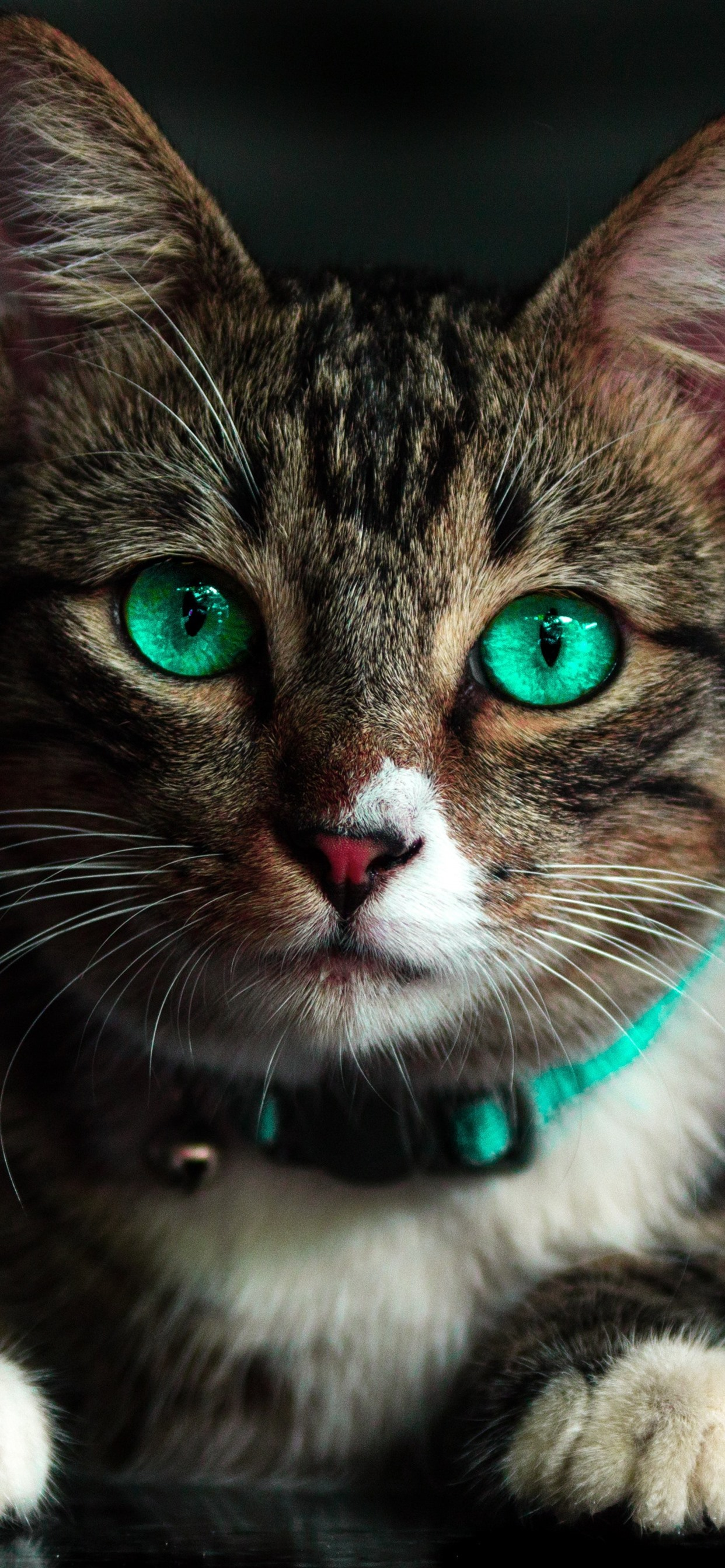 Cute Cat Look At You Face Green Eyes 1242x2688 Iphone 11 Pro Xs Max Wallpaper Background Picture Image