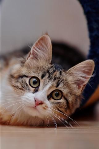 iPhone Wallpaper Cute kitten look at you, floor