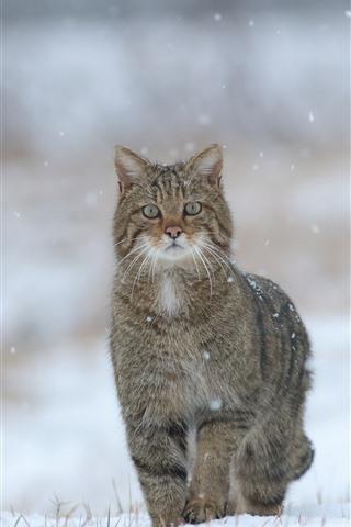 iPhone Wallpaper Cute kitten, snowy, winter