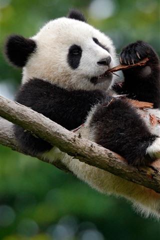 iPhone Wallpaper Cute panda play in the tree